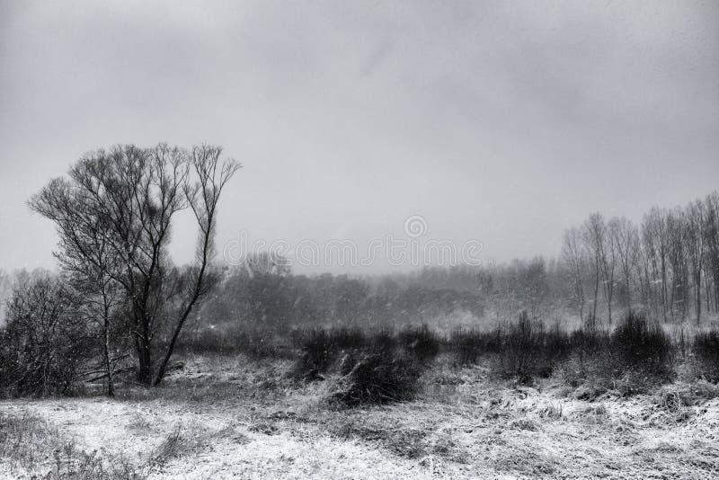 Landcape 1 do inverno fotografia de stock royalty free