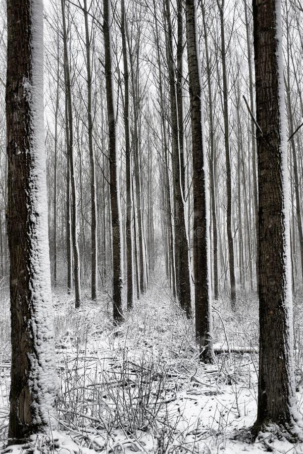 Landcape 3 do inverno imagens de stock royalty free