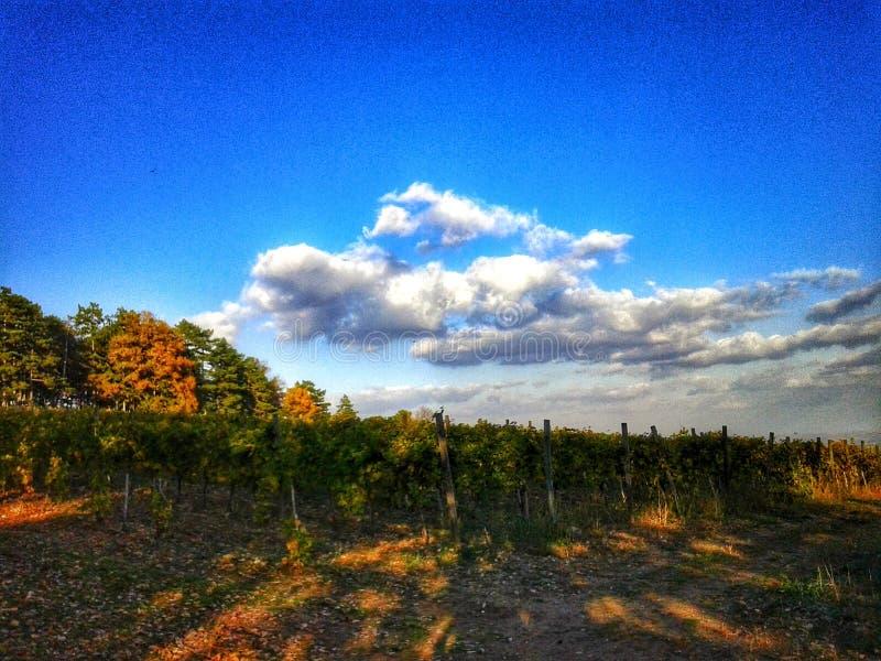 Landcape stock photos