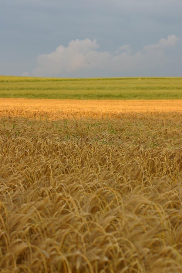 landcape z gospodarstw rolnych zdjęcia stock