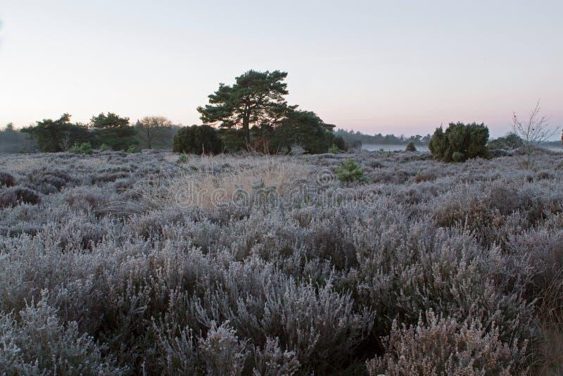 Lande et forêt pendant le début de la matinée avec le brouillard photos stock