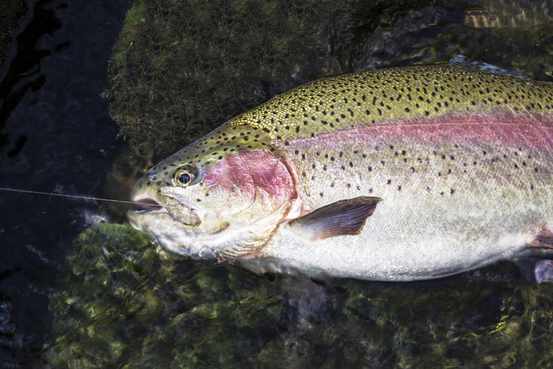 Landed Fish stock photo