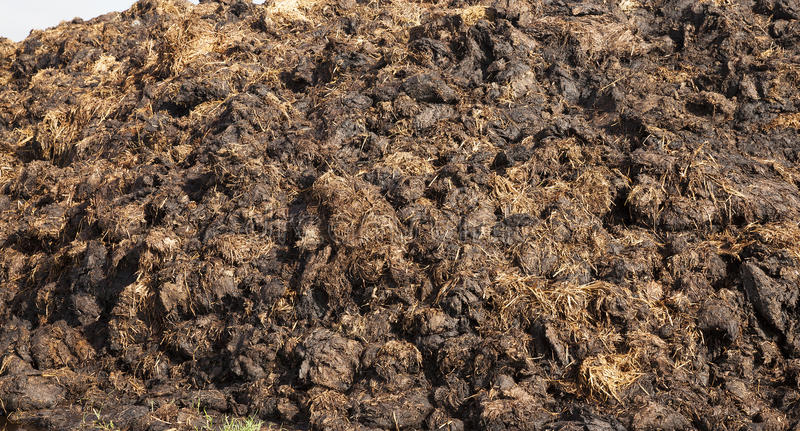 Are landed in a pile of manure stock photos