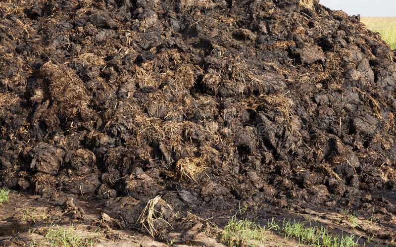 Are landed in a pile of manure stock image