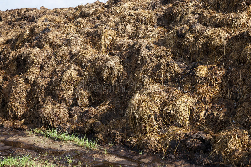 Are landed in a pile of manure stock photography