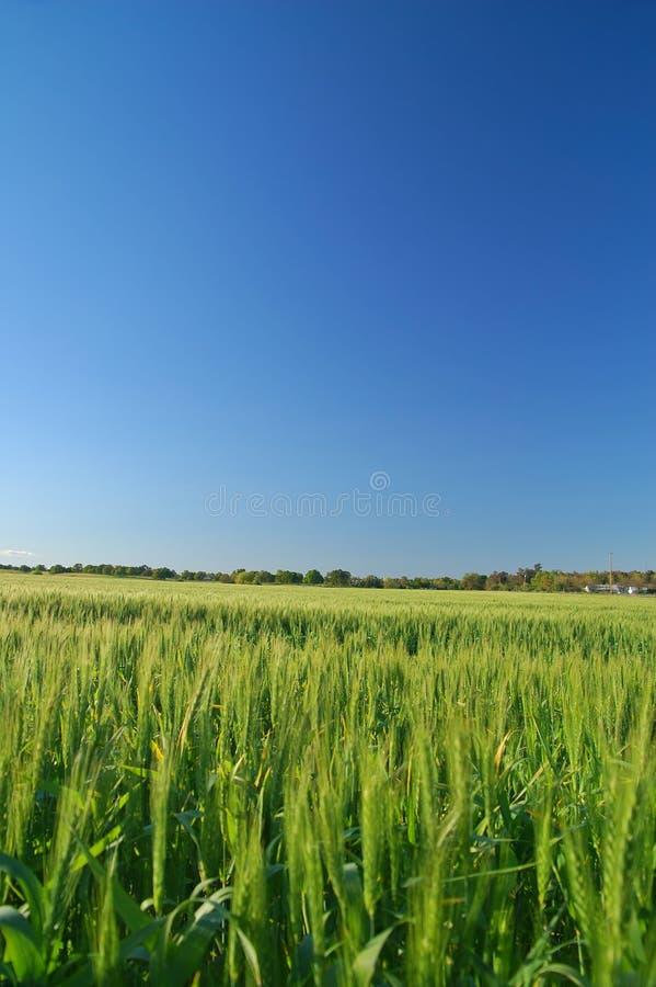 Landelijk de lenteplatteland stock afbeeldingen