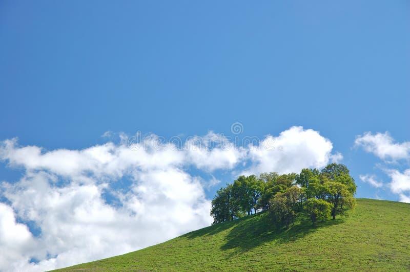 Landelijk de lenteplatteland stock foto