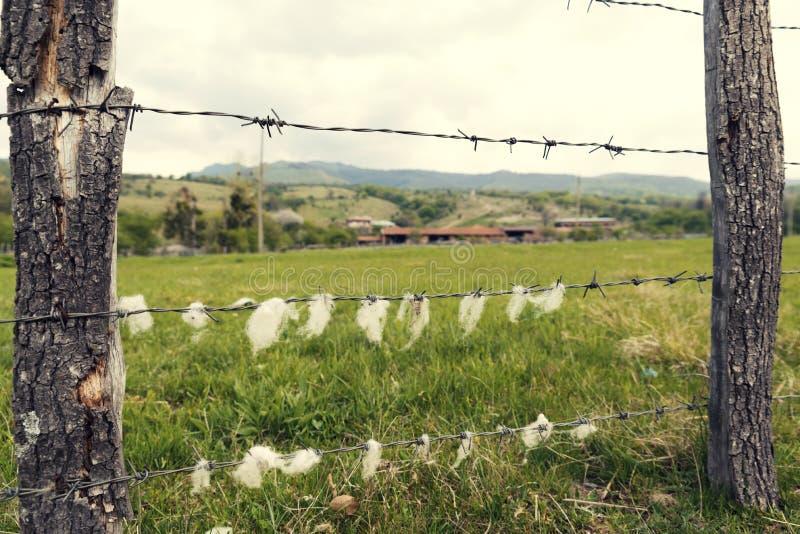 Landelijk dierlijk landbouwbedrijf in de Houten omheining van het land met prikkeldraad met schapenwol stock afbeelding