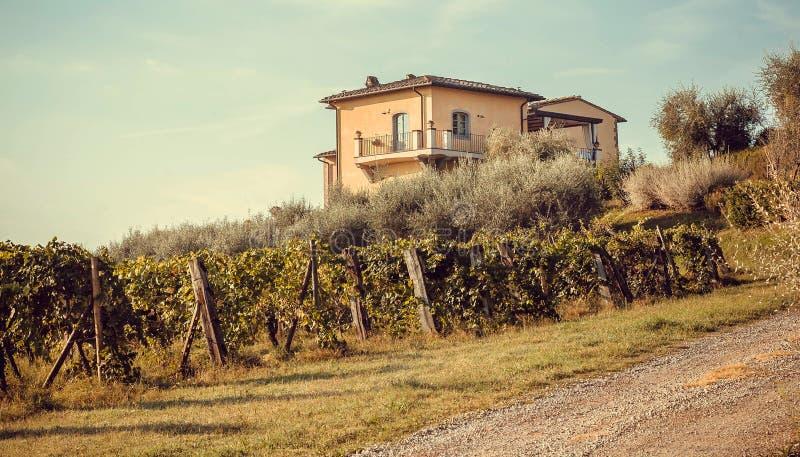 Landelijk huis over wijngaard met rijpe wijndruiven Druiven van wijnstokken in Italië bij zonnige ochtend royalty-vrije stock fotografie