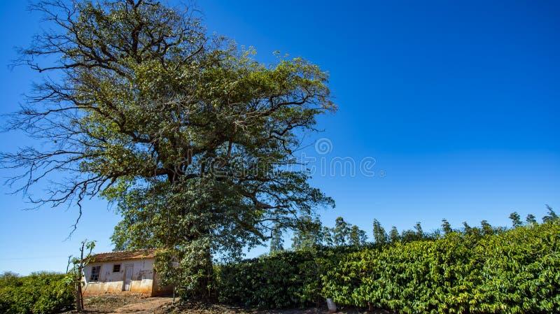 Landelijk landbouwbedrijf in de wereld, plattelandshuisje stock afbeeldingen