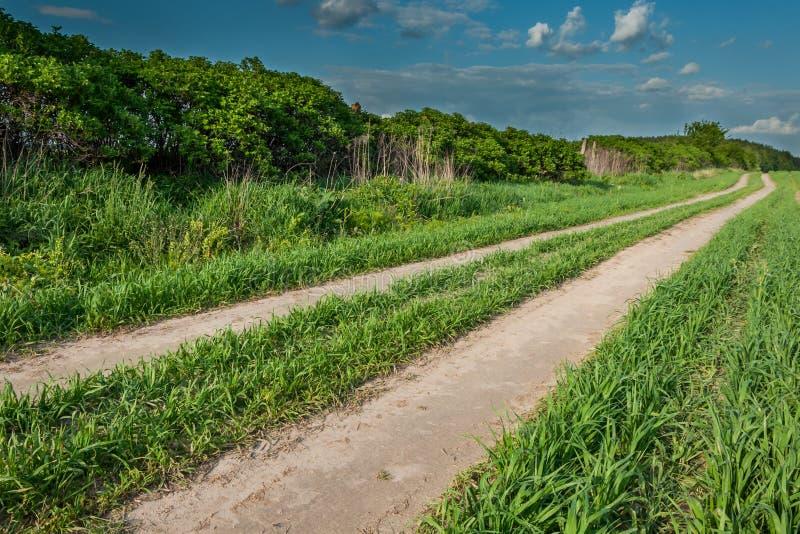 Landelijk landschap de gebieds zandige weg langs struiken aan het hout onder de blauwe bewolkte hemel royalty-vrije stock afbeelding