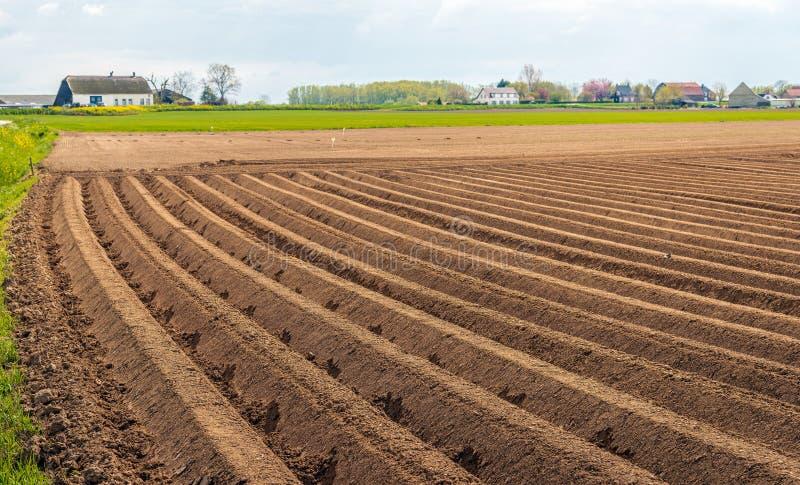 Landelijk landschap met aardappelranden in de voorgrond royalty-vrije stock afbeelding