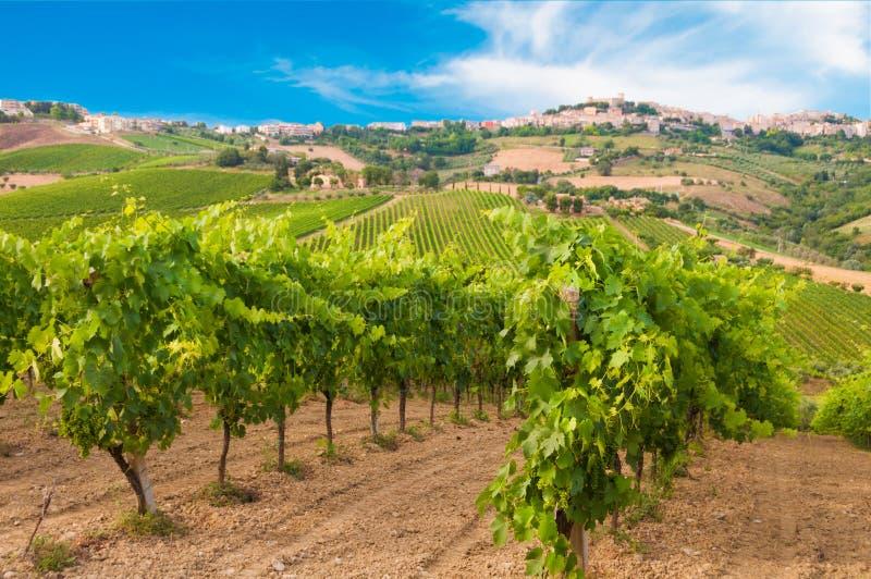 Landelijk landschap met een groene wijngaard onder heuvels royalty-vrije stock foto