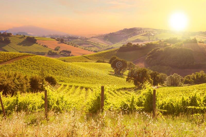 Landelijk landschap met een groene wijngaard onder heuvels stock foto