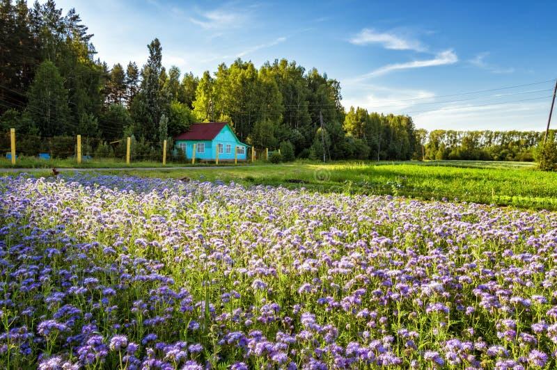 Landelijk landschap met een plattelandshuisje en lavendelgebiedsbloemen van Rusland, het Oeralgebergte royalty-vrije stock foto