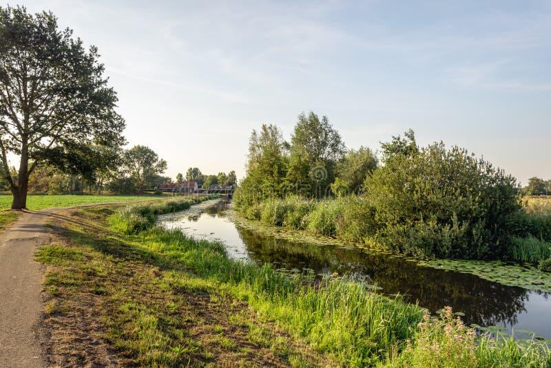 Landelijk landschap met een smalle stroom op een zonnige de zomeravond stock afbeeldingen