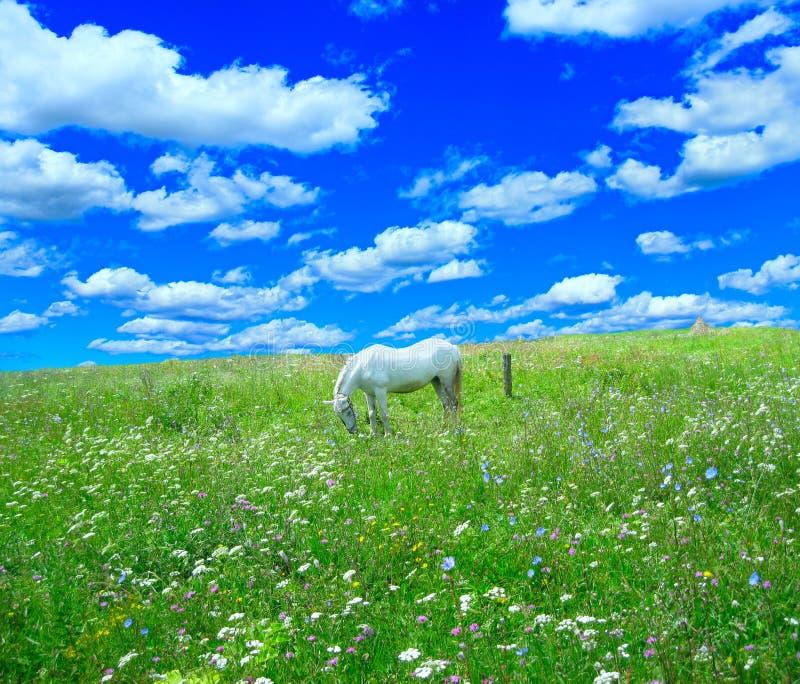 Landelijk landschap met gebied van bloemen en paard royalty-vrije stock afbeeldingen