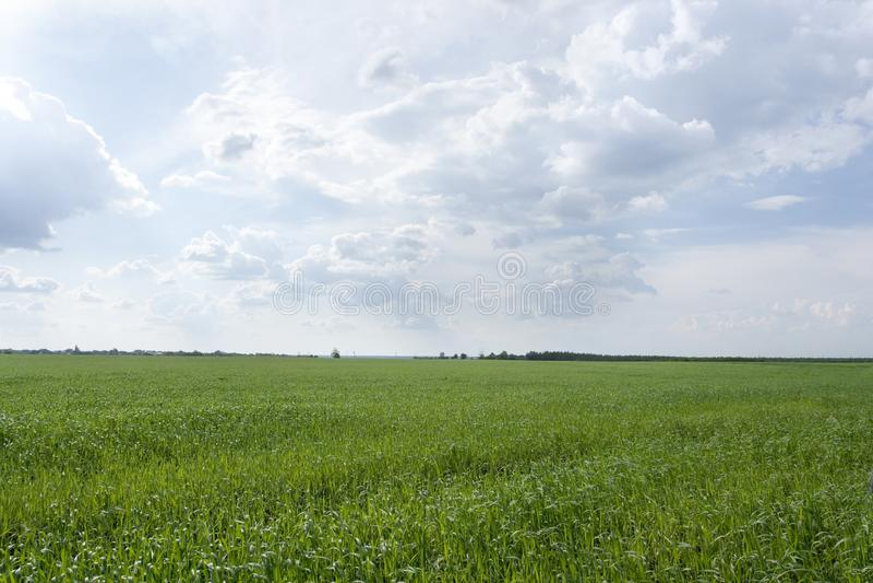 Landelijk landschap met graangebied, niemand, lege achtergrond met exemplaarruimte royalty-vrije stock foto's