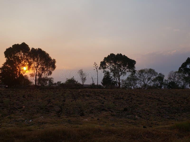 landelijk landschap met het silhouet van de bomen bij zonsondergang in Toluca, Mexico stock foto