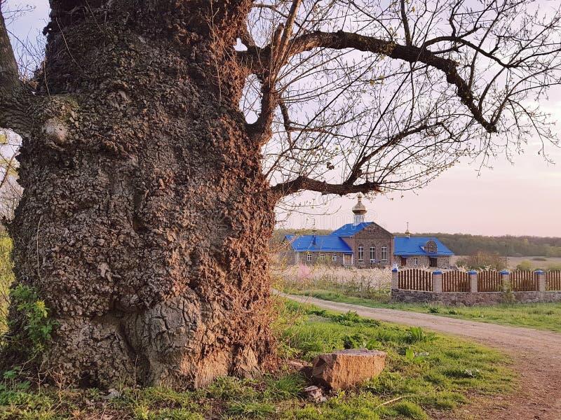 Landelijk landschap met kerk en zeer oude boom met reusachtige boomstam stock fotografie