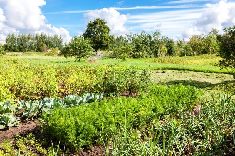 Landelijk landschap met organische moestuin in de zomerdag stock foto