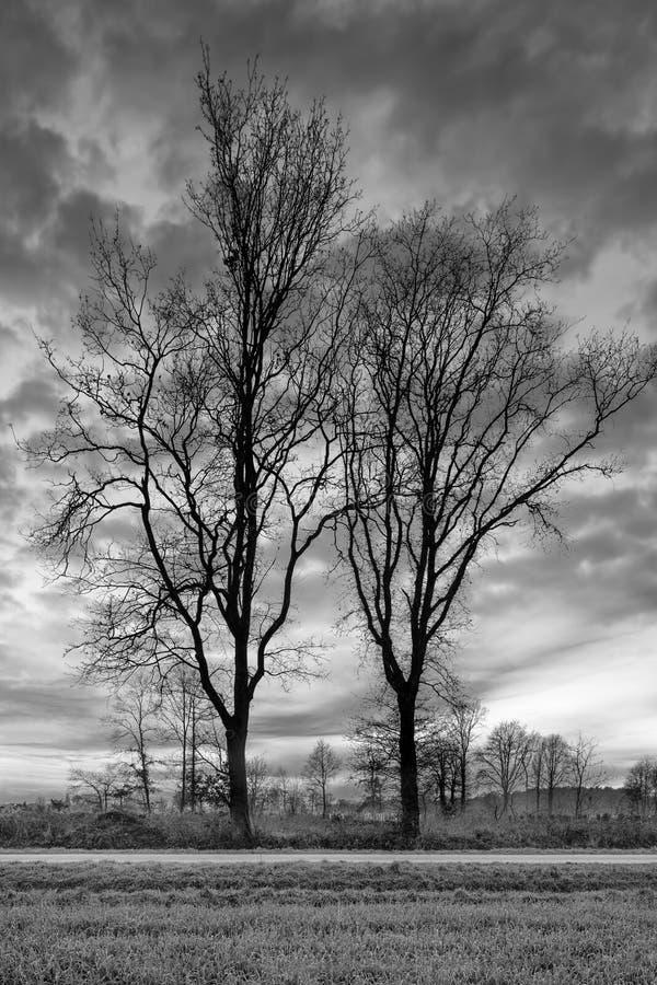 Landelijk landschap met rij van bomen en een mooie zonsondergang, Weelde, België royalty-vrije stock foto