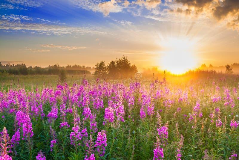 Landelijk landschap met zonsopgang en tot bloei komende weide royalty-vrije stock fotografie