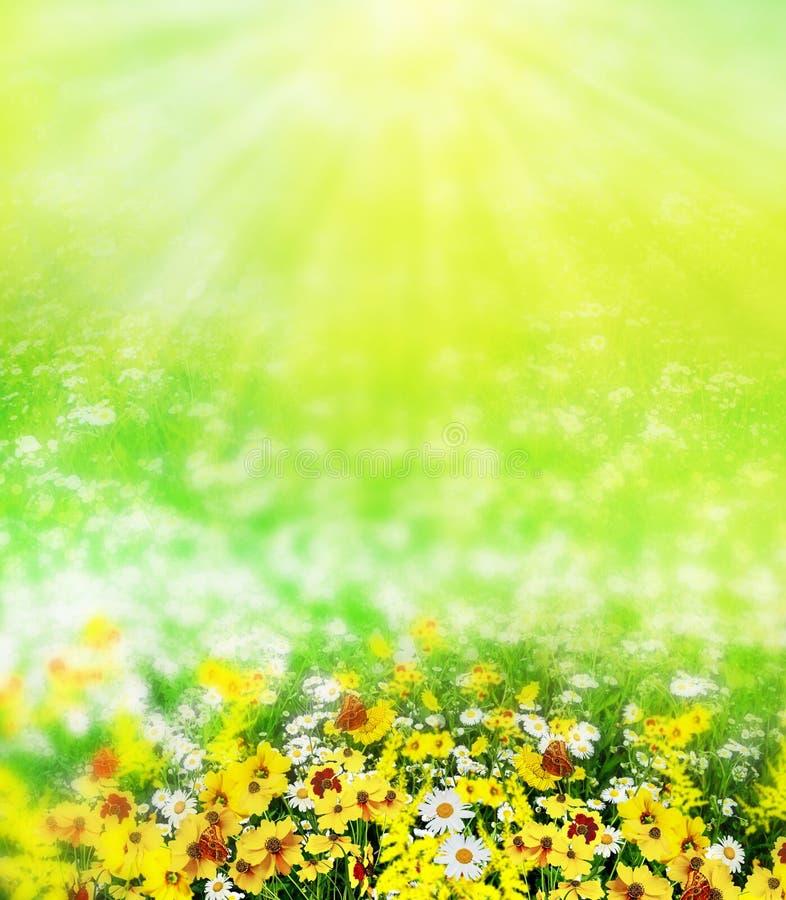Landelijk landschap op een zonnige dag in de zomer royalty-vrije stock fotografie