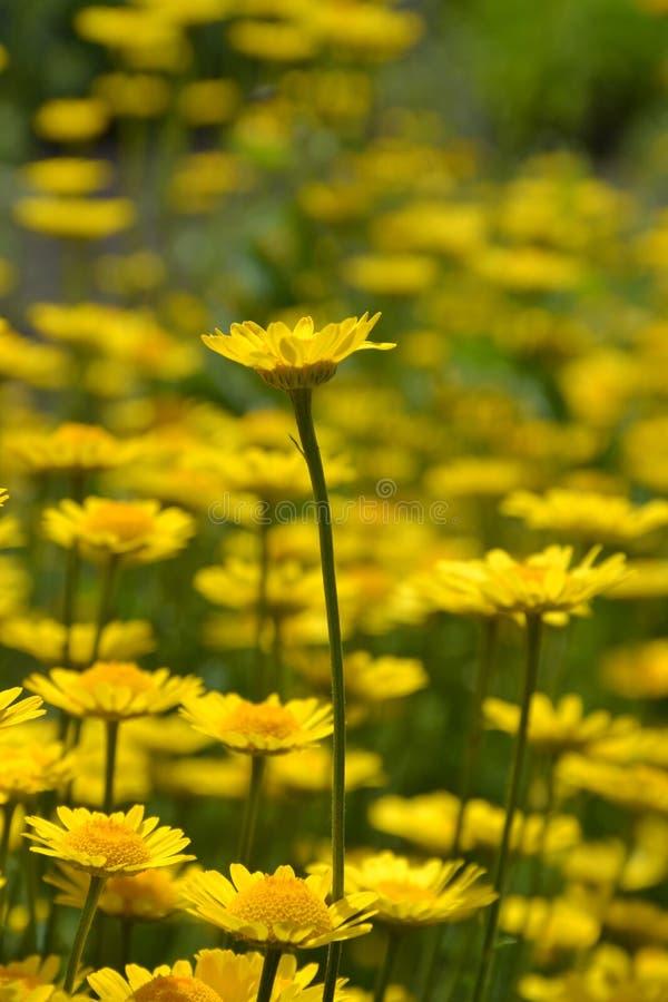 Landelijk landschap op een zonnige dag in de zomer stock afbeeldingen