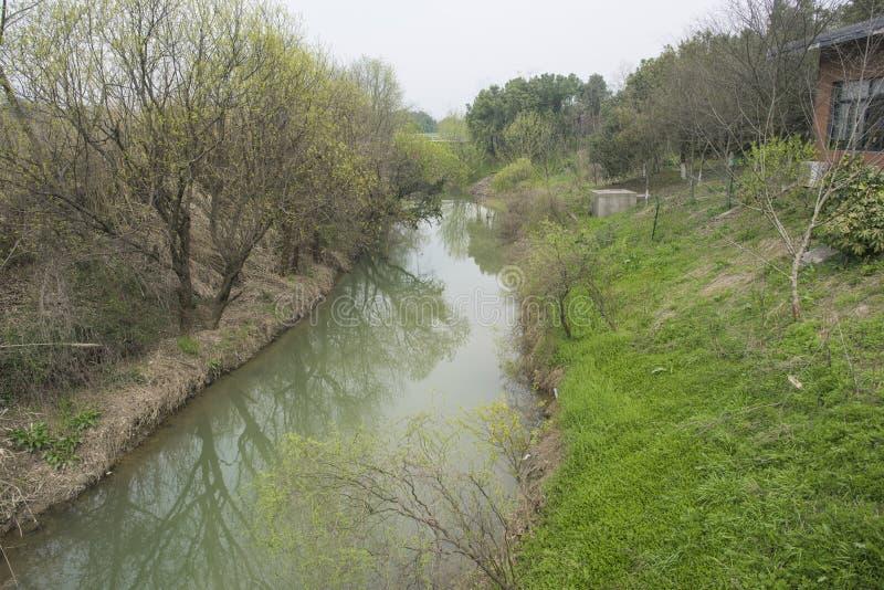 Landelijk landschap, riviergras en wilg royalty-vrije stock foto