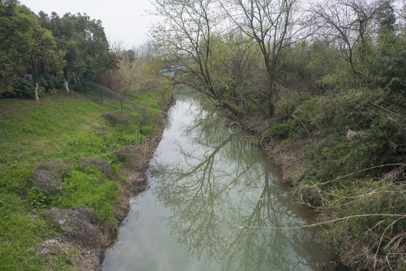 Landelijk landschap, riviergras en wilg stock afbeeldingen