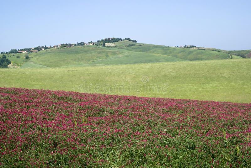 Landelijk landschap in Toscanië royalty-vrije stock afbeelding