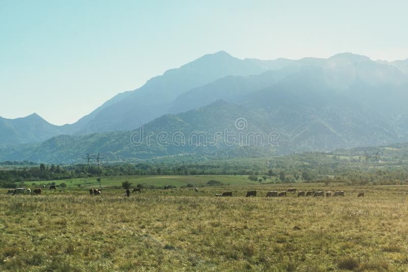 Landelijk landschap van Roemenië royalty-vrije stock foto's