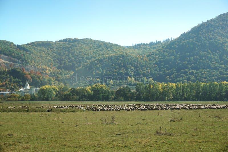 Landelijk landschap van Roemenië royalty-vrije stock fotografie