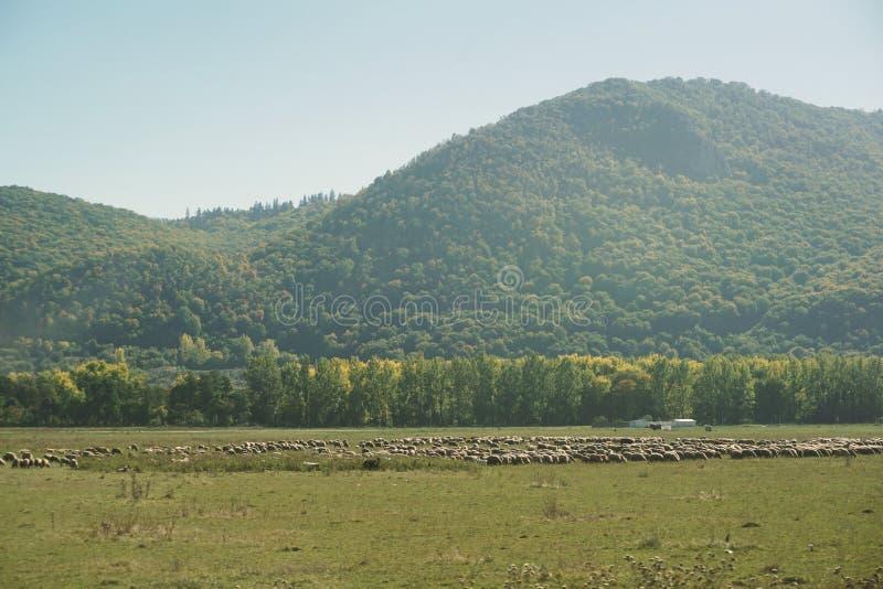 Landelijk landschap van Roemenië royalty-vrije stock foto