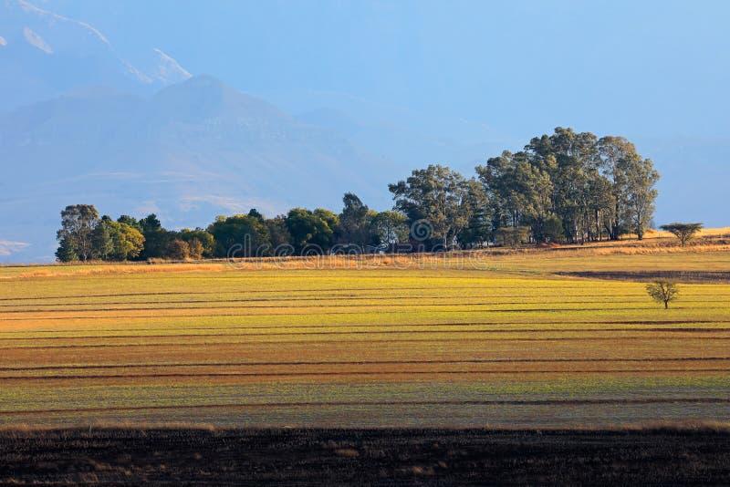 Landelijk landschap - Zuid-Afrika royalty-vrije stock afbeelding