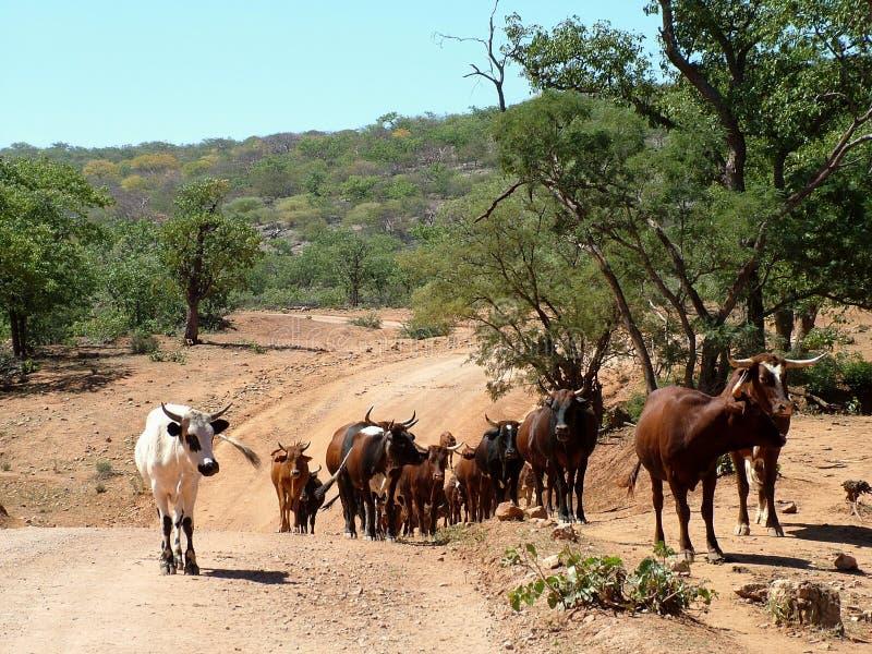 Landelijk Namibië stock foto's