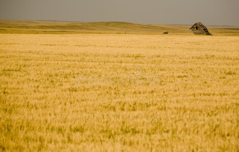 Landelijk Saskatchewan royalty-vrije stock foto