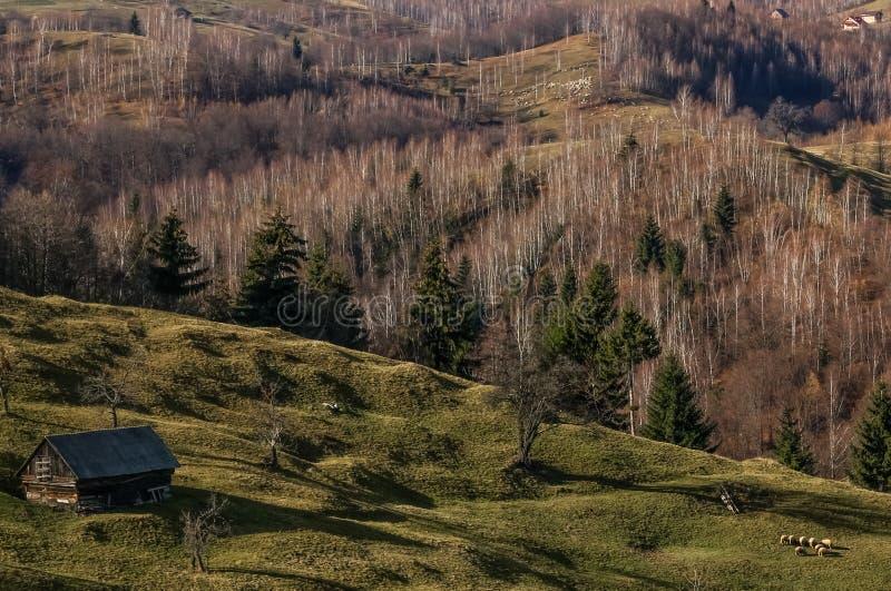 Landelijk schapenlandbouwbedrijf op bergen stock foto's