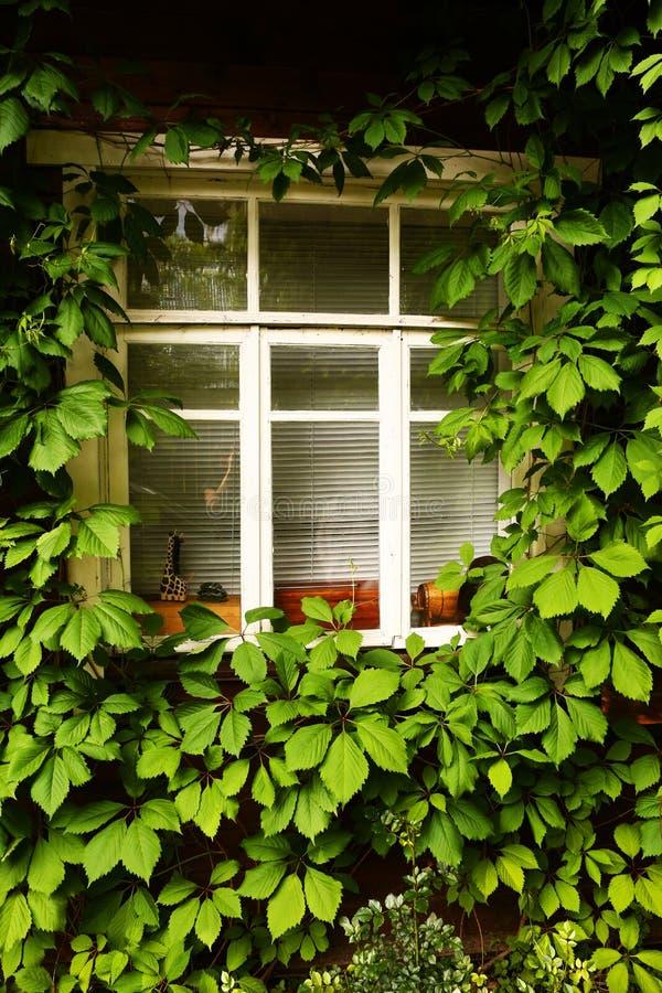 Landelijk venster met de dichte omhooggaande foto van het druivenkader royalty-vrije stock foto