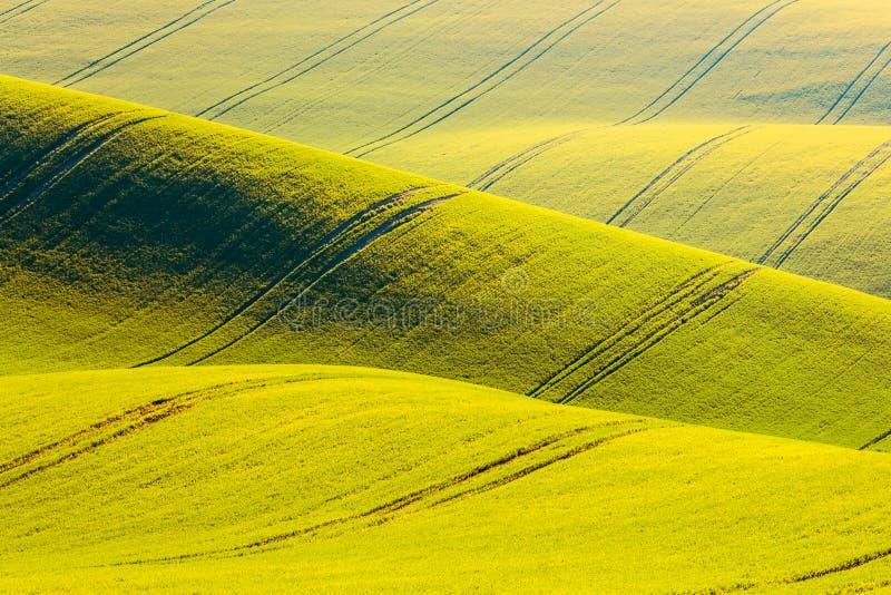 Landelijke de textuurachtergrond van de de lentelandbouw Gele de golvenheuvels van het verkrachtingsgebied in Zuid-Moravië, Tsjec stock foto's