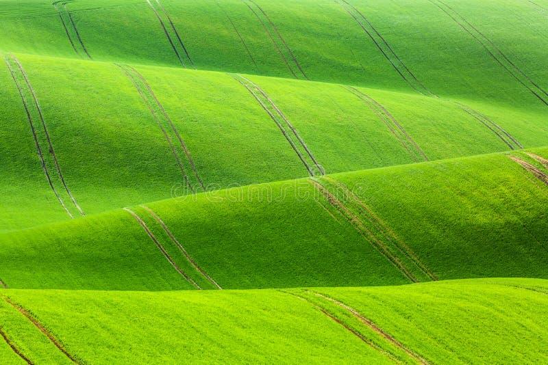 Landelijke de textuurachtergrond van de de lentelandbouw Groene golvenheuvels in Zuid-Moravië, Tsjechische Republiek Groen gebied royalty-vrije stock afbeeldingen