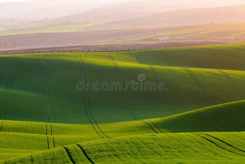 Landelijke de textuurachtergrond van de de lentelandbouw Groene golvenheuvels in Zuid-Moravië, Tsjechische Republiek tijdens zons stock afbeeldingen
