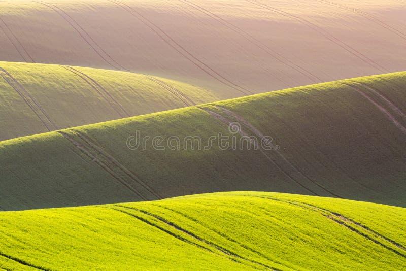 Landelijke de textuurachtergrond van de de lentelandbouw Groene golvenheuvels in Zuid-Moravië, Tsjechische Republiek tijdens zons stock fotografie