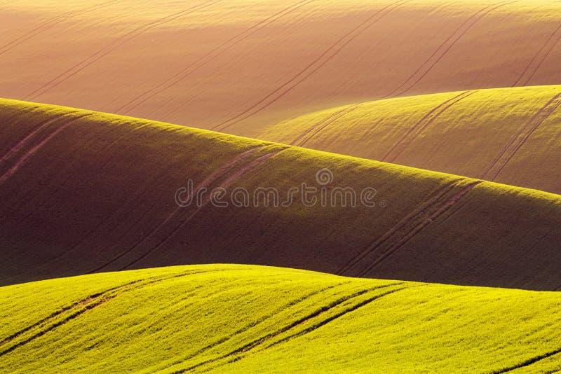 Landelijke de textuurachtergrond van de de lentelandbouw Groene golvenheuvels in Zuid-Moravi?, Tsjechische Republiek tijdens zons royalty-vrije stock foto's