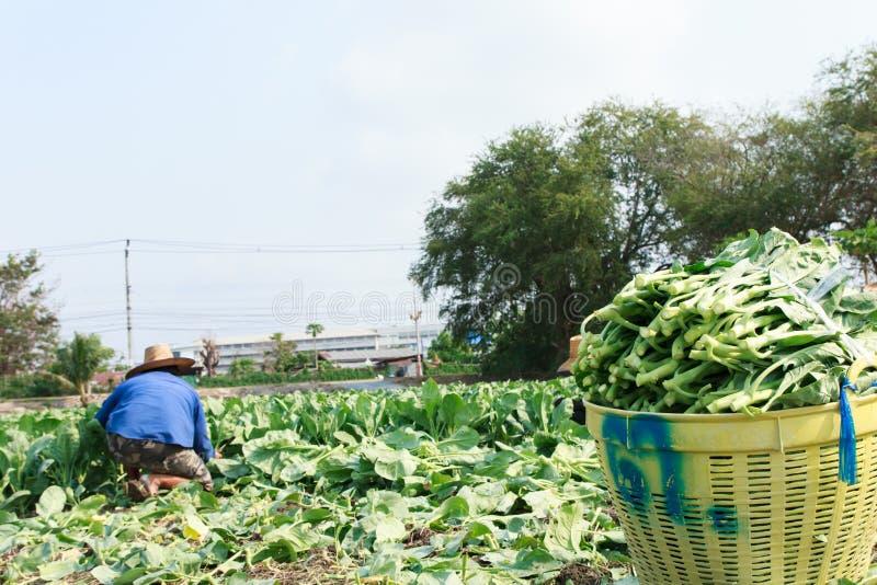 Landelijke landbouwer royalty-vrije stock foto's