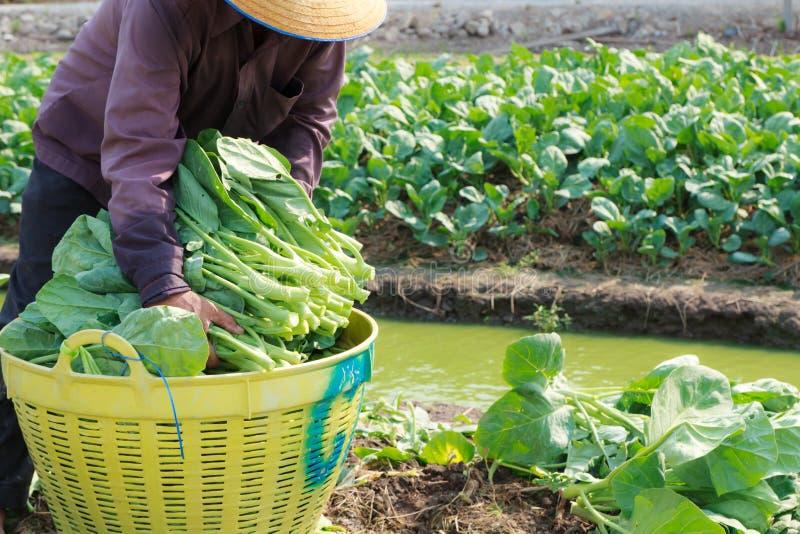 Landelijke landbouwer royalty-vrije stock afbeeldingen