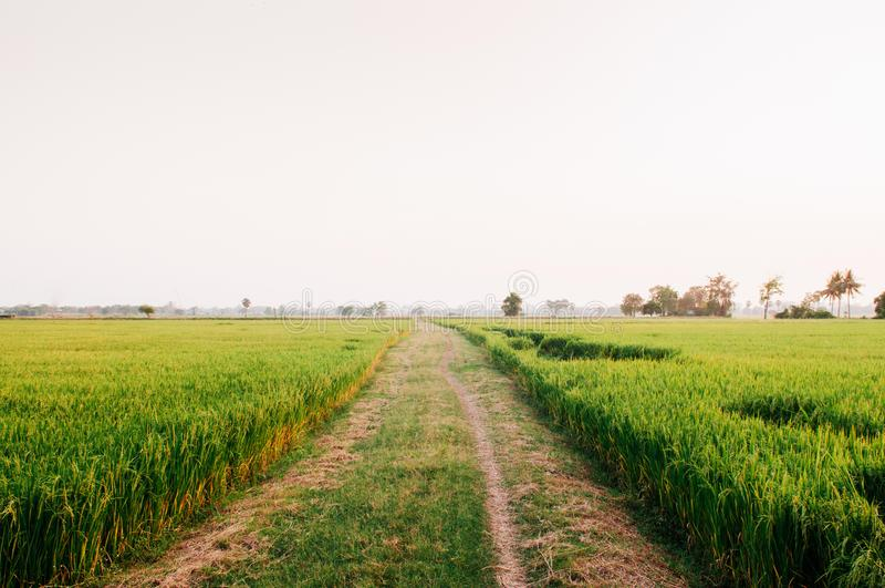 Landelijke landweg en tropisch groen padieveld in Koh Tepo, Uthai royalty-vrije stock foto