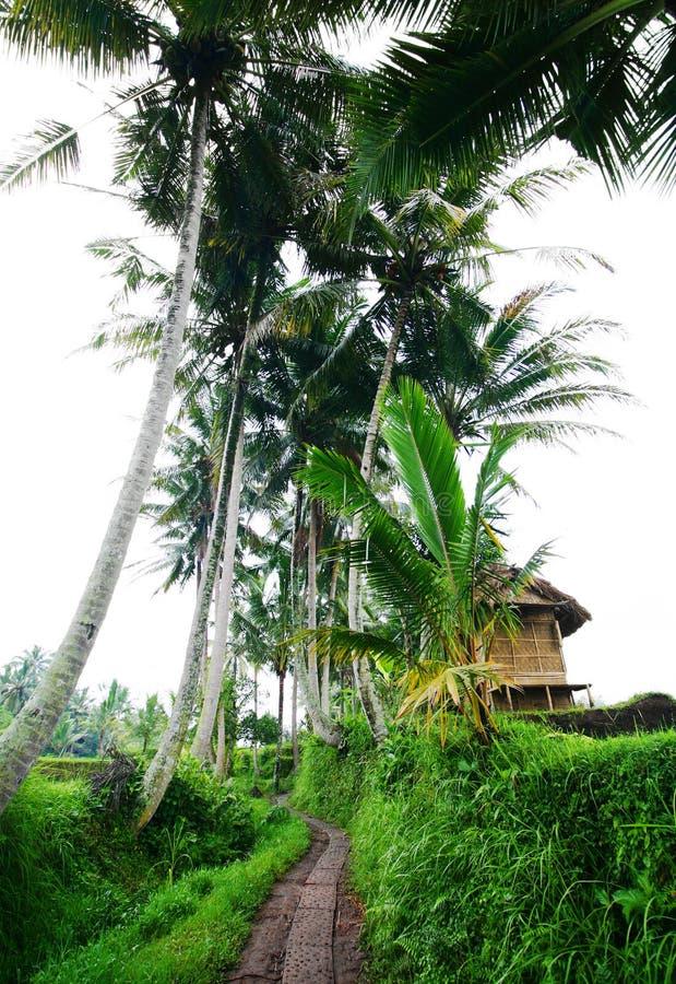 Landelijke scène in Bali met landbouwershut stock fotografie