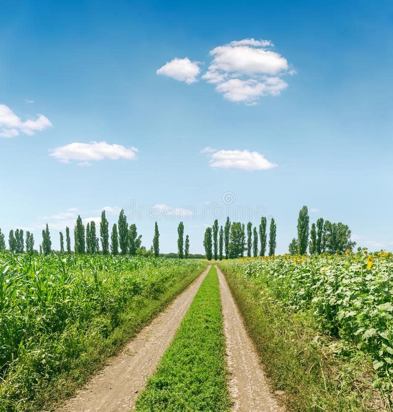 Landelijke vuile weg op groen landbouwgebied in de lentetijd en blauwe hemel met wolken stock foto